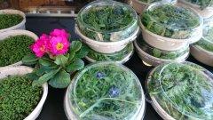 hofladen-salat.jpg